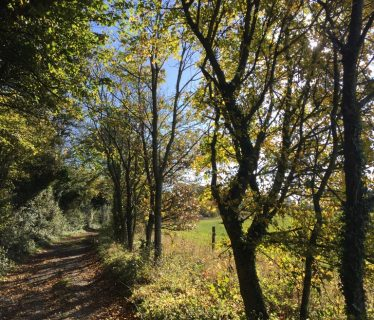 Autumn Trees near Lomer Farm