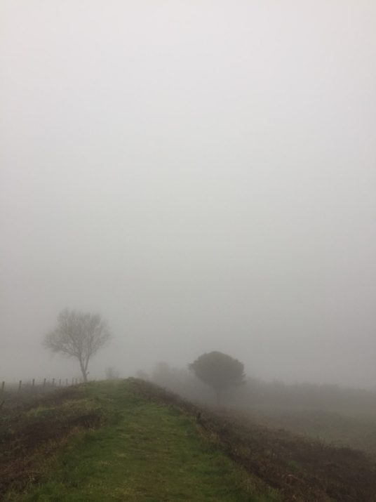 Foggy day view butser hill jill pringle