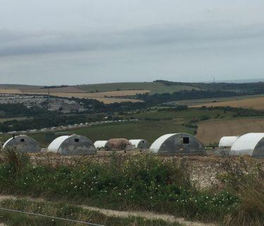 Pig Farms near Botolphs