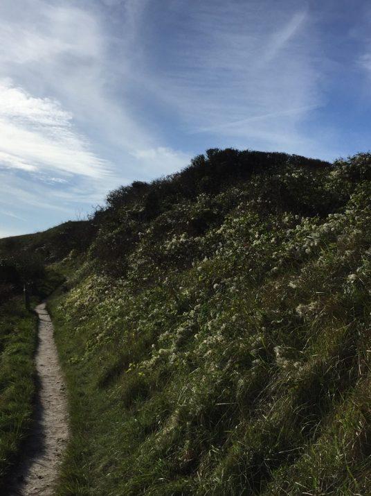scrubland SDW path near eastbourne